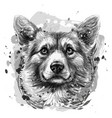 pembroke welsh corgi graphic black and white vector image vector image