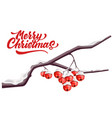 merry christmas lettering rowan red berry vector image