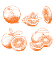 Orange Isolated vector image vector image