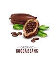 realistic cocoa composition vector image vector image