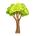 tree with green leafage abstract stylized tree vector image