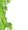 Tropical plant vector image