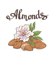 Almonds with kernels leaves and flower vector image vector image