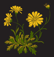 Hand drawn Dandelion flowers isolated on black vector image