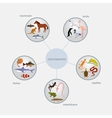 vertebrates classification infographics vector image
