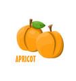 logo apricot farm design vector image vector image