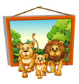 Photo frame of lion family vector image vector image