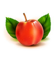 photo realistic peach 3d fruit with leaves vector image