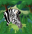 zebra in the jungle vector image vector image