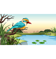 A river kingfisher vector image vector image
