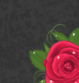 Beautiful rose isolated on grunge background vector image vector image