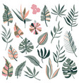 collection tropical plants palm leaves vector image vector image