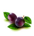 realistic plums fruit with leaves isolated on vector image
