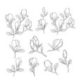 set floral elements vector image vector image