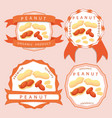the theme peanut vector image vector image