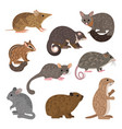 african carnivores animals leadbeater possum vector image