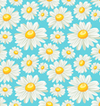 chamomile field seamless pattern vector image