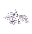 drawing branch aapple tree vector image vector image