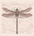 drawing of dragonfly on an abstract background vector image