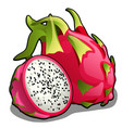 set of whole and half of ripe pitahaya fruit or vector image