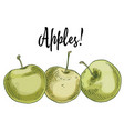 three delicious green apples isolated on white vector image vector image