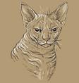 brown cat portrait 3 vector image