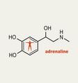 formula hormone adrenaline vector image