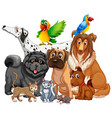 group pet on white background vector image vector image