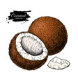 hand drawn coconut tropical summer fruit vector image