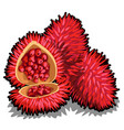 set of whole and half of ripe annatto tree fruit vector image vector image
