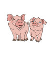 two cute funny pigs vector image vector image