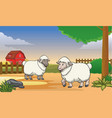 two happy sheep in the farm with cartoon style vector image vector image