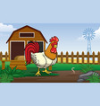 rooster in farm yard with cartoon style vector image vector image