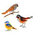 singing smalls birds black redstart titmouse vector image