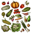 vegetables sketch isolated icons vector image vector image