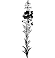 willow herb vector image