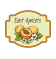 Apricots with flowers and leaves vector image vector image