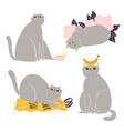 cute british shorthair cat collection 3 vector image