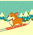 dog skiing on winter mountains background vector image vector image