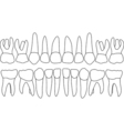 primary teeth front vector image vector image