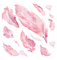romantic feathers set vector image
