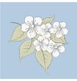sakura flowers elements vector image