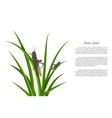Grasshopper sitting on green grass vector image