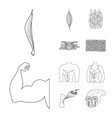 isolated object of fiber and muscular symbol vector image