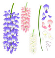 violet blue pink and white wisteria vector image vector image