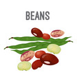 organic natural beans of all species with high vector image vector image