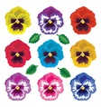 pansy flowers vector image vector image