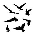 set seagulls silhouettes vector image