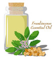 frankincense essential oil vector image vector image