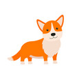 cute dog breed welsh corgi it can be used vector image